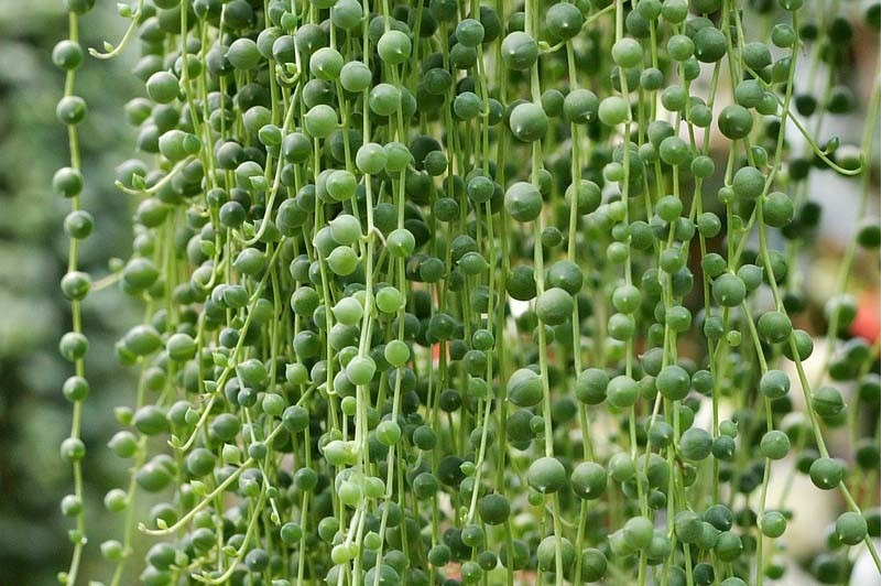Confira As Espécies De Plantas Para Sol Pleno Que Encantarão